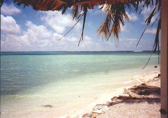 sandy shore, palm tree to right side, some leaves and branches hanging at top of picture, blue-green water